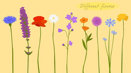 Wild flowers, colorful, different, vector illustration