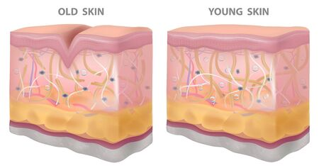 Skin young old wrinkles, dryness, realistic drawing,structure vector illustration Illustration