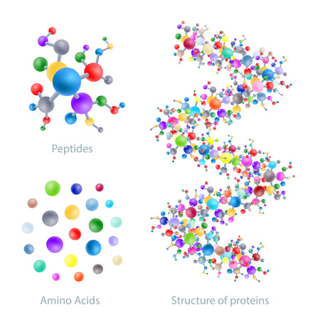 Structure of protein, peptides, amino acids, vector illustration Иллюстрация