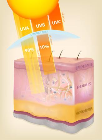 Die Sonnenstrahlen Schichten der Haut. Dreidimensionale Zeichnung, realistisch, Vektorillustration