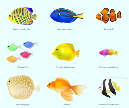 Fish species, volume, set vector illustration 일러스트