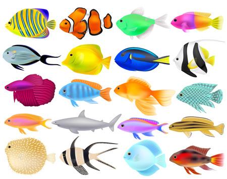 Set of different fish, three-dimensional realistic objects, vector illustration Standard-Bild - 128230735