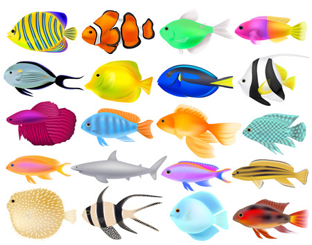 Set of different fish, three-dimensional realistic objects, vector illustration