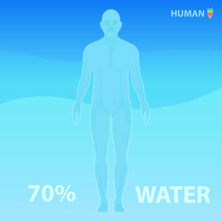 The human body consists of 70% water. Vector infographic illustration
