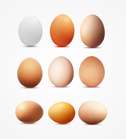 Realistic vector image of yellow and white eggs. Illustration