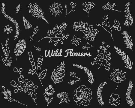 Leaves of wild flowers. Vector set.