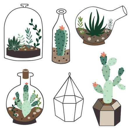 terrarium: Vector set with succulents flowers and glass terrariums. Vector illustration.