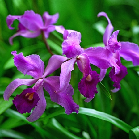 purple orchid: Purple Orchid on natural background
