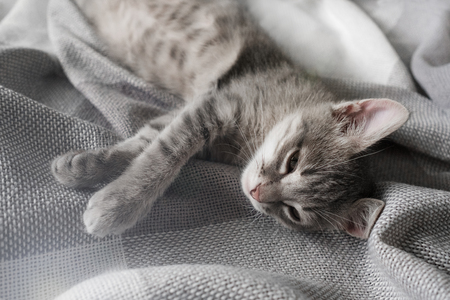 A cute gray kitten is sleeping on the bed. Beautiful gray cat