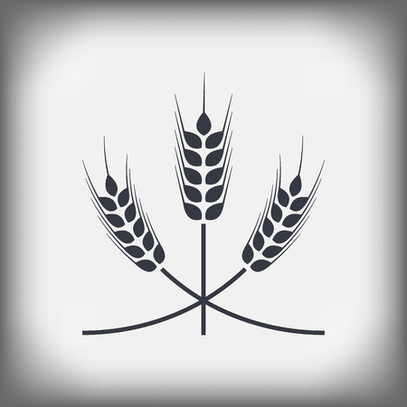 winter wheat: wheat ears . On an isolated background.