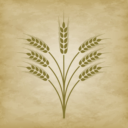 winter wheat: spikelets of wheat on a grunge background