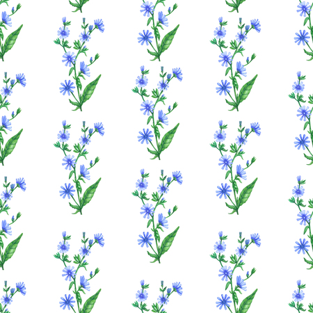 seamless pattern flowers wild chicory_branches wild chicory Banco de Imagens