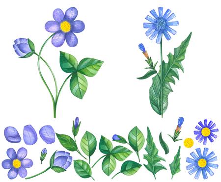 Hand drawn set of watercolor violet and blue flowers Isolated on white background