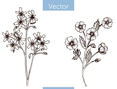 monochrome Vektor handgezeichnete Wildblumen auf weißem Hintergrund