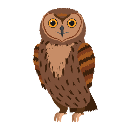 Owl Forest bird. Vector illustration isolated on white background.