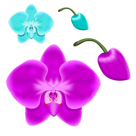 The flowers and buds of orchids. Isolated objects for design.