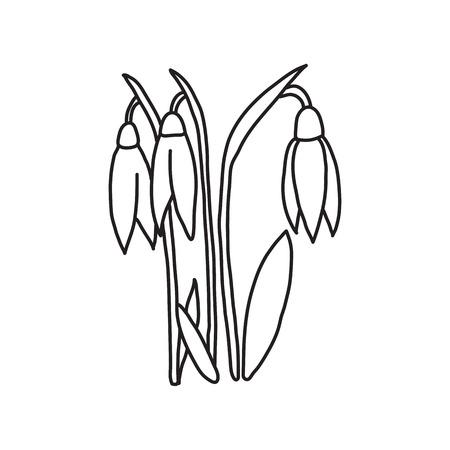 Snowdrop hand drawn line icon.