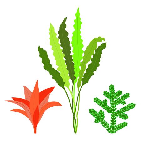 Set of algae. Seaweed. Isolated on white background. Vector illustration.