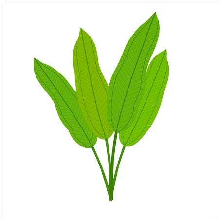 Seaweed isolated on white background. Vector illustration. Ilustracja