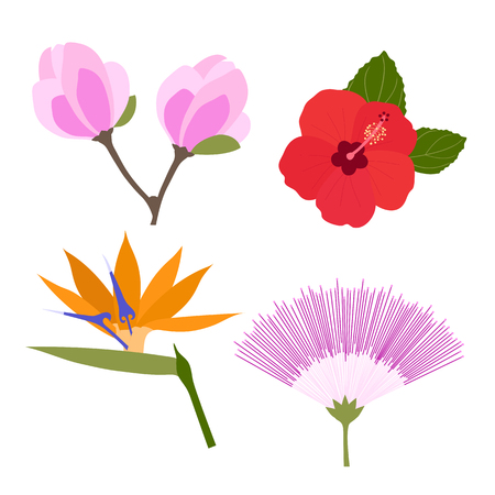 Set of tropical flowers isolated on white background. Silk tree flower, strelitzia, hibiscus, Magnolia. Vector illustration.