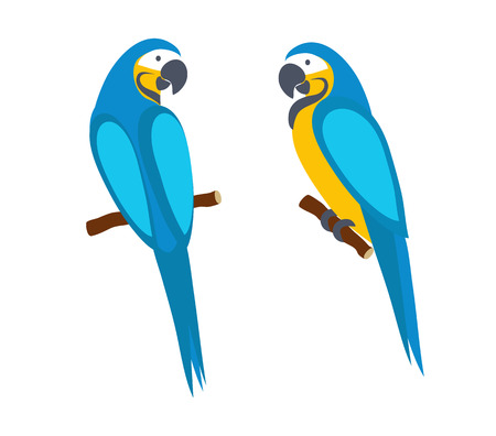 Macaw parrot. Side and rear view. Isolated on white background. Tropical bird. Vector illustration.