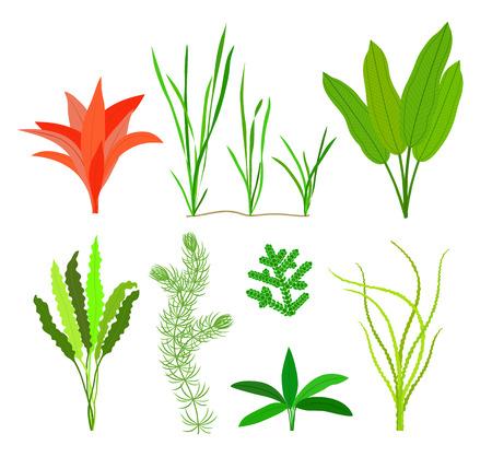 Sea plants and aquatic marine algae. Seaweed set isolated on white background. Vector illustration. Ilustracja