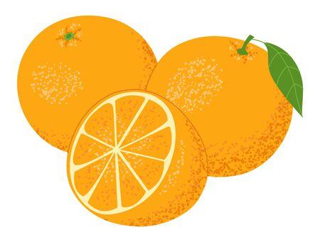 Set of whole fresh ripe oranges fruits, cut in half, sliced. Isolated on white background. Vector illustration. Ilustracja