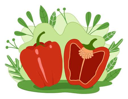Red bell pepper. Whole and cut in half on the background of leaves and plants. Vector illustration. 일러스트