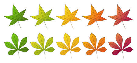 The leaf of the chestnut and sweet gum tree. Set of different autumn colors. Isolated on a white background. Vector illustration.