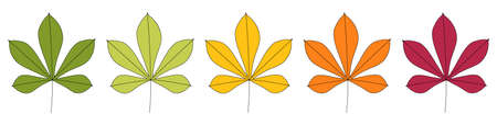 Chestnut leaves in autumn colors. Isolated on a white background. Vector illustration.