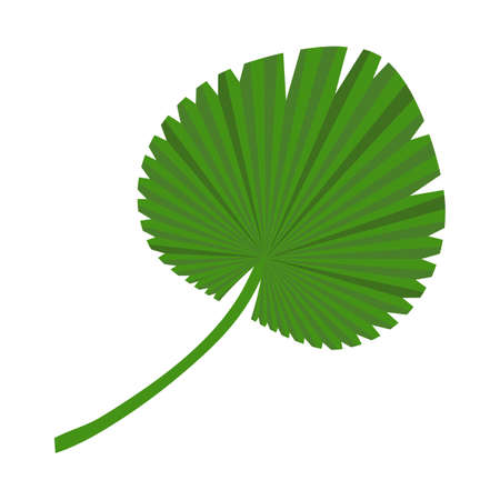 The palm leaf. Isolated on a white background. Vector illustration. 向量圖像