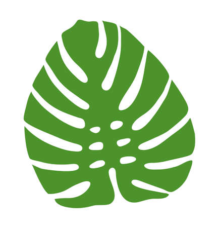Leaf of the monstera plant. Isolated on white background. Vector illustration. 向量圖像