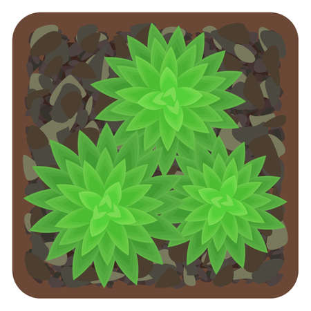 Potted succulents. The view from the top. Isolated on white background. Vector illustration. 矢量图像