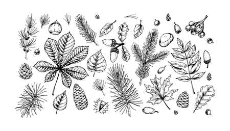 Big set of hand drawn forest design elements. Vector illustration in sketch style isolated on white background. Includes leaves, cones, branches, acorns, chestnuts