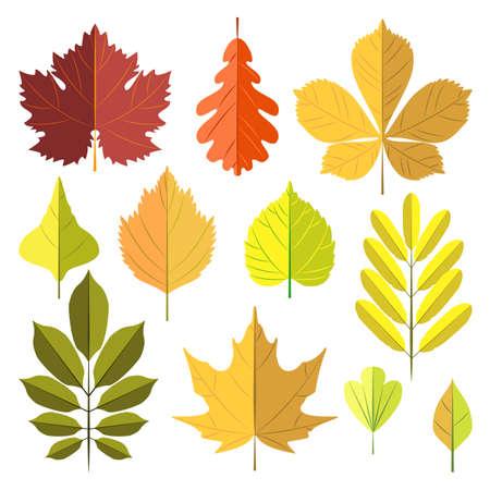 Set of autumn leaves isolated on white background. Vector illustration Vektorové ilustrace