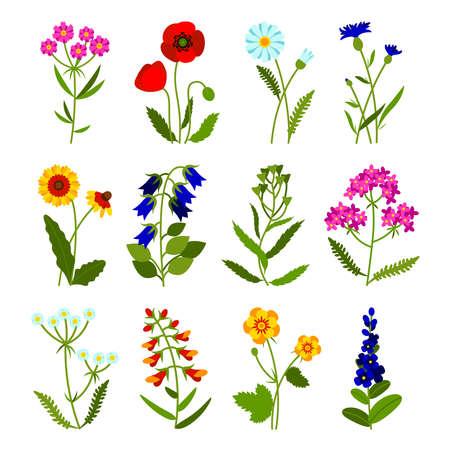 Set of field flowers including poppy, chamomile, cornflower, lady's purse, buttercup, snapdragon, bell, lavender. Summer flowers. Vector illustration in a flat style. Vektorgrafik