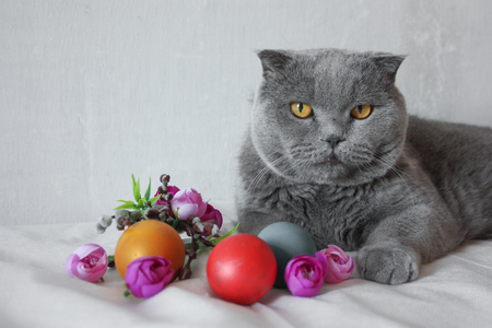 Easter eggs: red, gold and green with willows, flowers on a white background with a gray cat. Photo for your design.