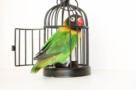 jailbreak: Jailbreak the concept. A parrot in a small cage. Photo for your design Stock Photo