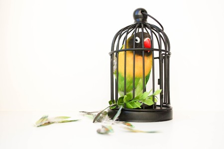 Parrot beautiful in a cage on a white background. Photographic with feathers scattered. Photo for your design