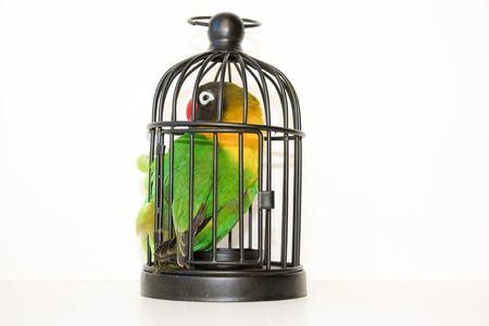 Caught. Parrot in a cage on a white background. Photo for your design