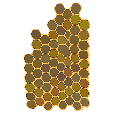 filled: Honeycomb hexagonal honeycombs filled with honey. on a white background. Vector illustration for your design.