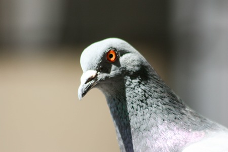 The concept of a video surveillance system. protection. Dove sharp eyes. Photo for your design Stock Photo