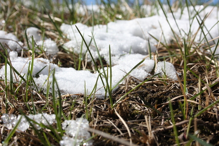 the first snow concept. the grass in the snow cap. the frozen ground. photo for your design Stock Photo