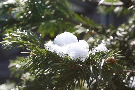 a branch of spruce under an armful of snow. winter photo for your design Stock Photo