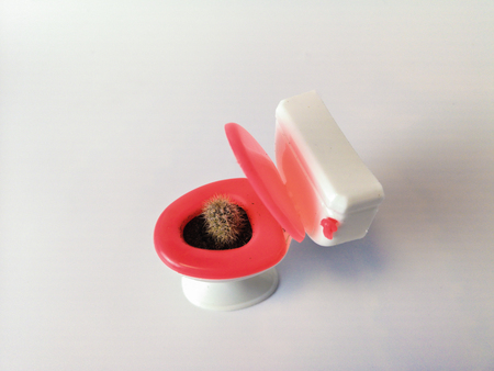 hemorrhoids concept. cactus green and a small toilet bowl. pain and pain Stock Photo