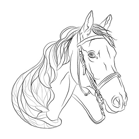 horse black white head. symbol of freedom. Vector illustration on white isolated background. sketching style