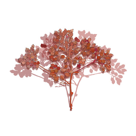 branch of a tree, in the style of sketching. red leaves on white background