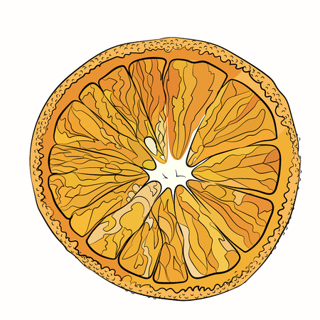 Orange juicy New Years cut. Vector illustration for your design on white background. sketching style Illustration
