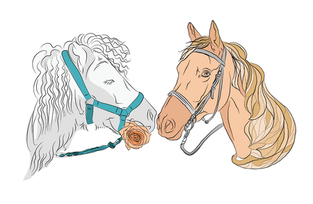 Two horses, a pair of beautiful and strong touch mrdami. love and family. the horse holds a rose in its mouth. white-maned horse with curly hair and pastel horse. Vector illustration on white background. isolated background