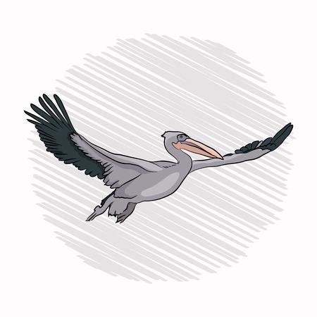 pelican flight. bird flies waving wings. on a white background Ilustracje wektorowe